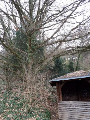 Baum hinter der Hütte