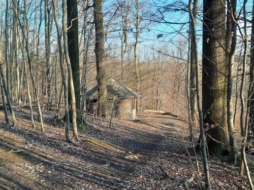 Hütte im Wald 2